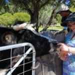 Farm life fun on a weekend country break